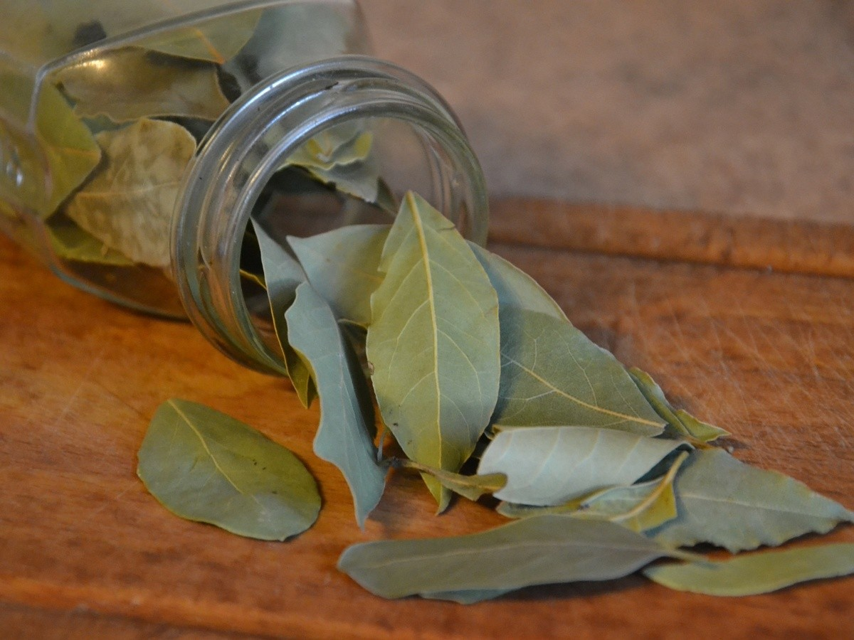 Té de hojas de laurel: Te explicamos para qué sirve y cómo se ...
